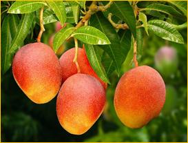 """Palavra do Calendário da PANIB para o mês de Julho e Agosto 2019: """"Quem cultiva a sua terra terá alimento em abundância"""" (Pr 12,11)"""